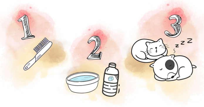 3 gestes simples pour rafraichir son animal
