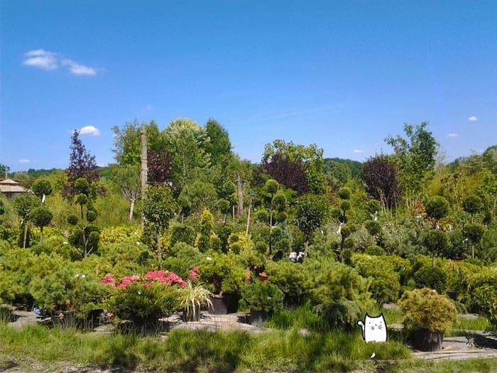jardin méditerranéen de plantes médicinales