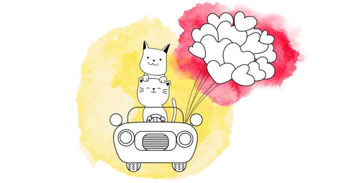 astuces en voiture pour le confort animal