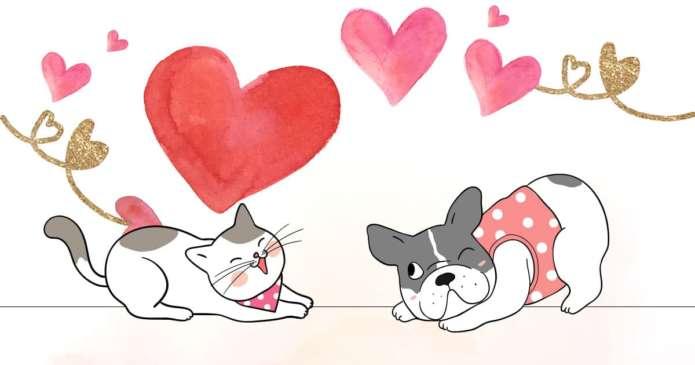 bonne cohabitation chien chat