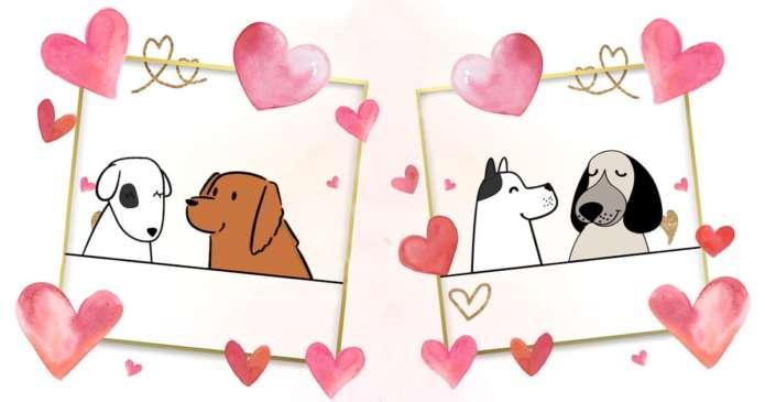 bonne cohabitation deux chiens