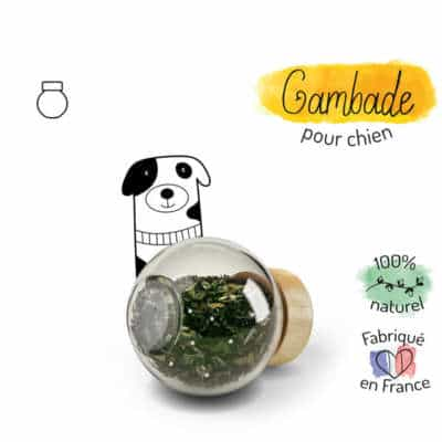 gambade complément alimentaire chien arthrose et articulations