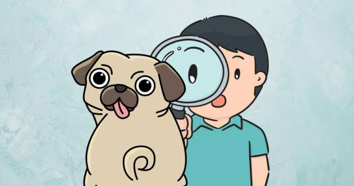 inspection poil chien