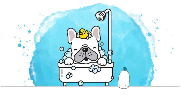 shampoing bain chien
