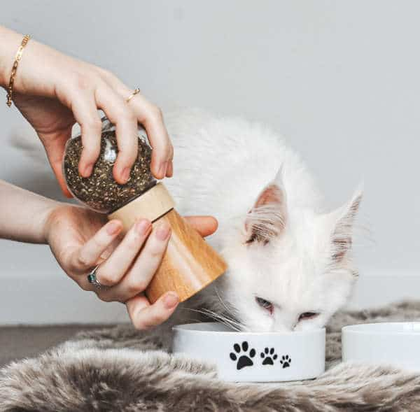 complément alimentaire naturel chat stress