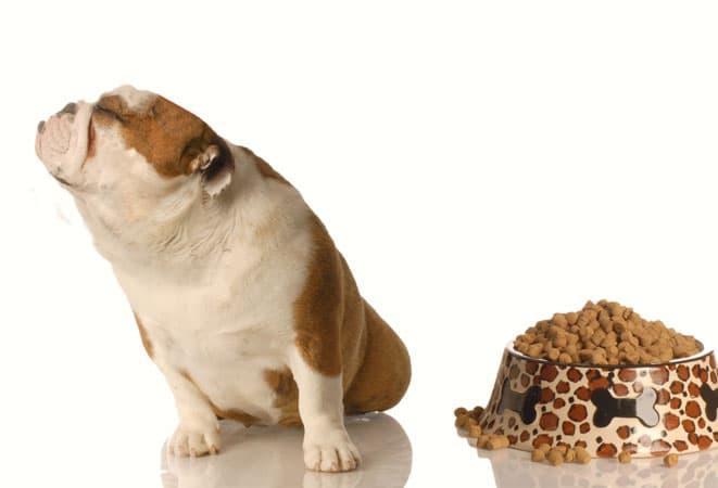 chien refus gamelle