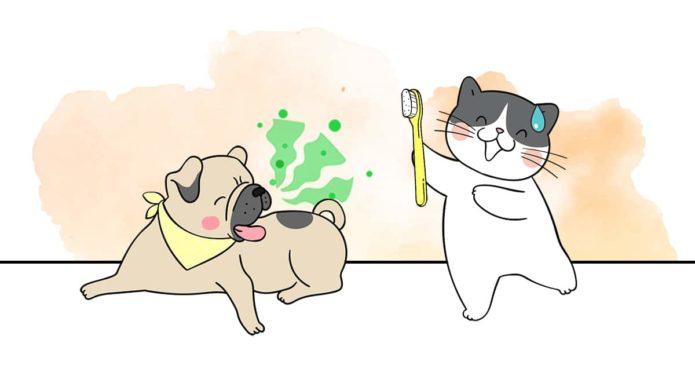 causes traitement soin mauvaise haleine chien chat